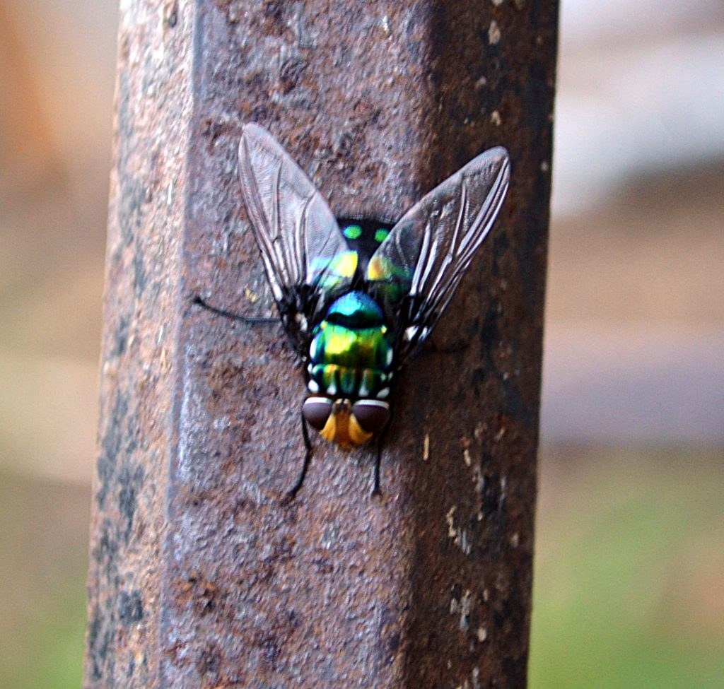 A Fly That is Not the March Fly